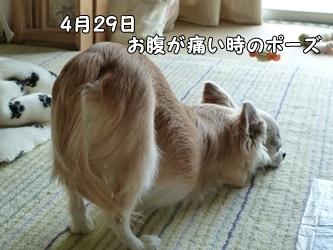 ブログ用031-2015 04 29-102307