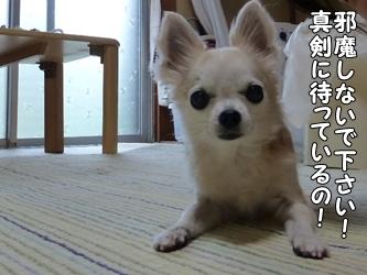 ブログ用035-2015 04 30-182110