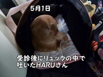 ブログ用036-2015 05 01-115817