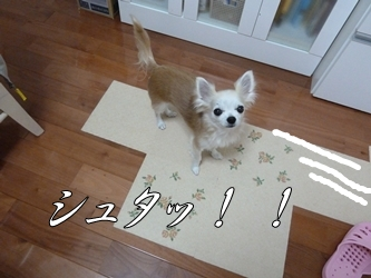 ブログ用005-2015 04 09-114237