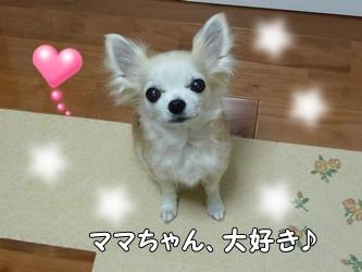 ブログ用010-2015 04 14-125931