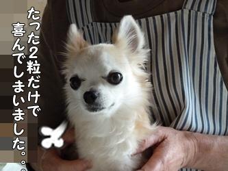 ブログ用007-2015 05 23-131947