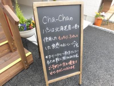 チャチャ (4)