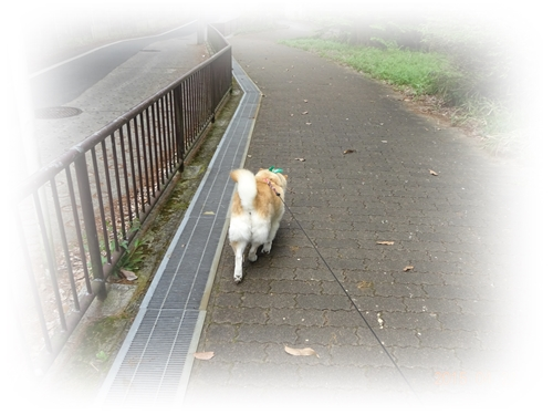 DSC01749歩け歩けカノン