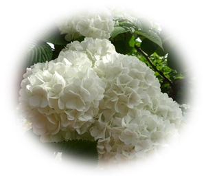 DSC01817白い花