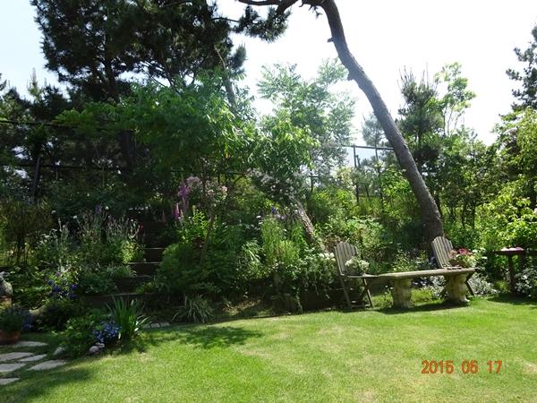 DSC01970癒されるお庭