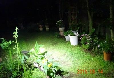 DSC02184センサーライト下の庭