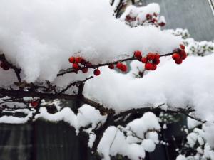 2FullSizeRender三次雪_convert_20150102224702