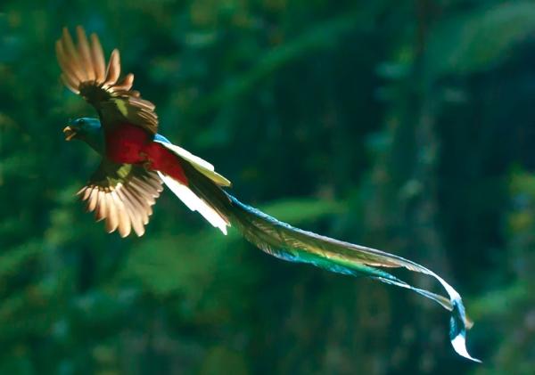 01-Quetzal-by-thor-lft.jpg