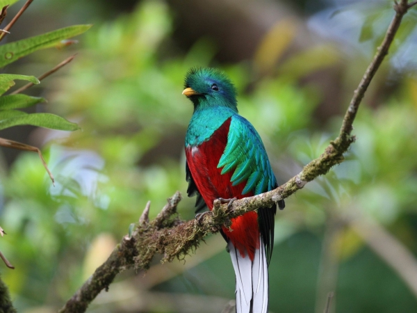 quetzal-Bird_Photography_Wallpaper_1600x1200.jpg