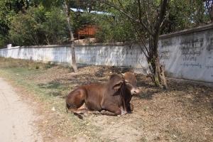 Sagaing_Hill_1502-203.jpg