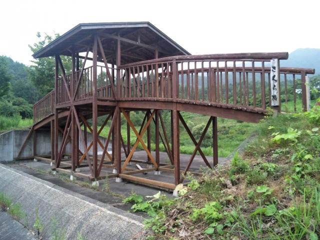 さくら橋 (7)