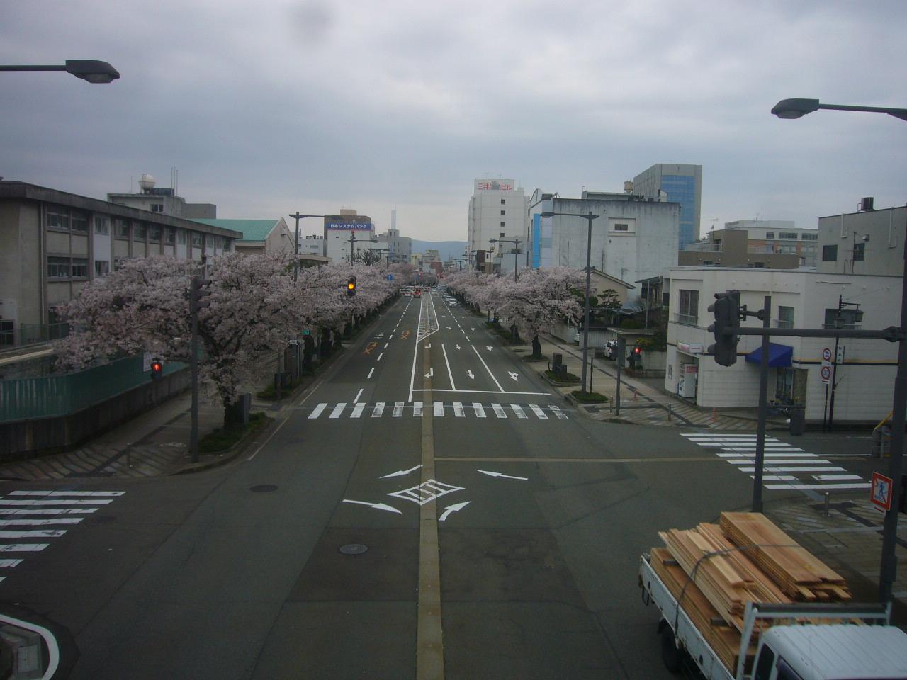 桜通りのうば桜 H27.4.10