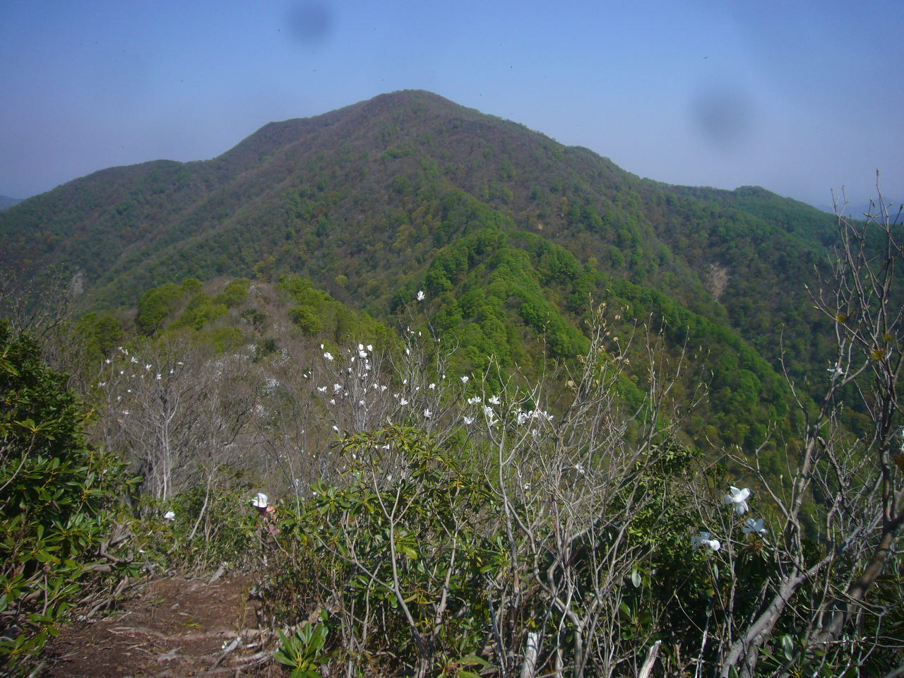 小倉谷山への道から富士写ケ岳H27.4.26