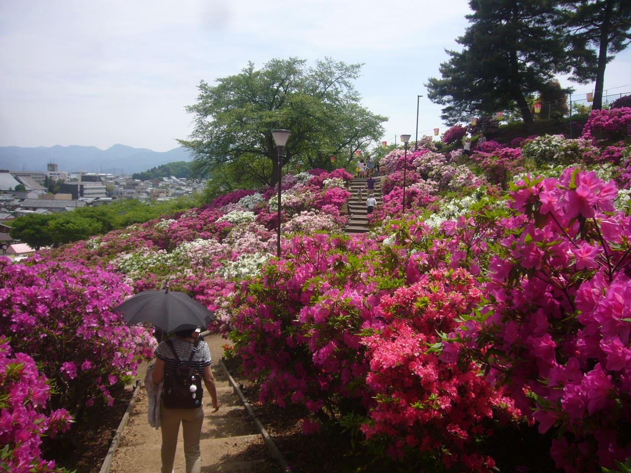 西山公園つつじの道H27.5.6