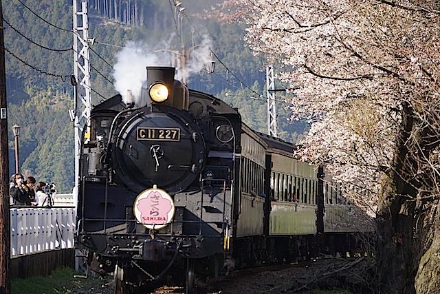 0328桜2