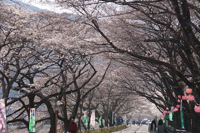 0328桜5