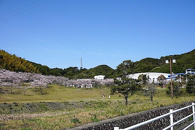 0404桜