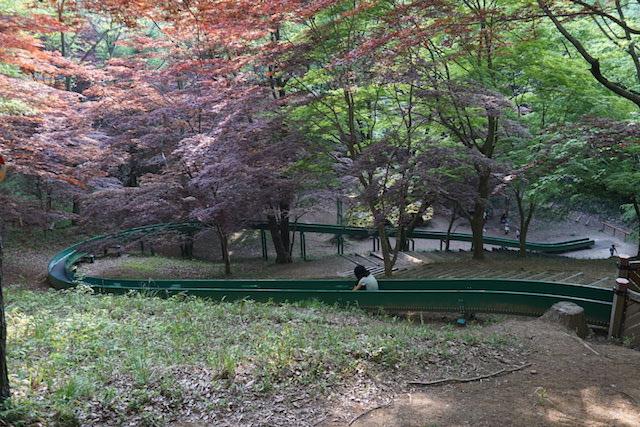 0429森林公園10
