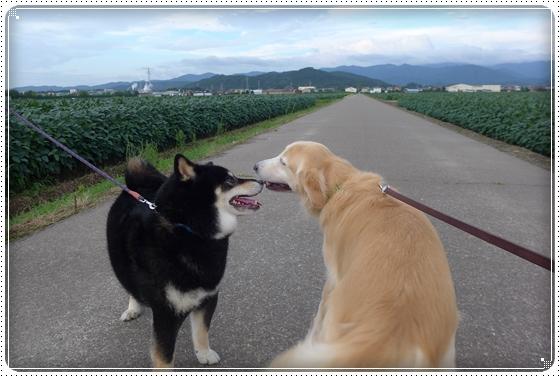 2015,8,19お散歩3