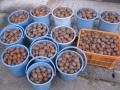 H26.12.22キウイの実収穫後(130k)@IMG_3982
