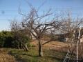 H27.2.3スモモの樹剪定後(H3.0)@IMG_4211