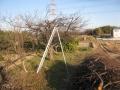 H27.2.3スモモの樹剪定後@IMG_4213
