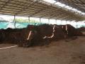 H27.2.9発酵牛糞堆肥(60t)@IMG_4252