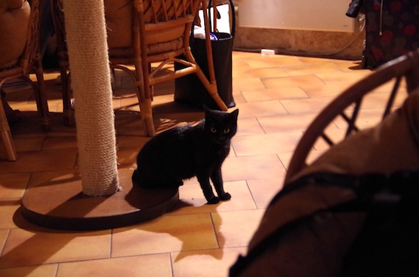 猫カフェ13