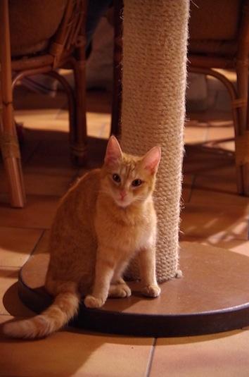 猫カフェ15