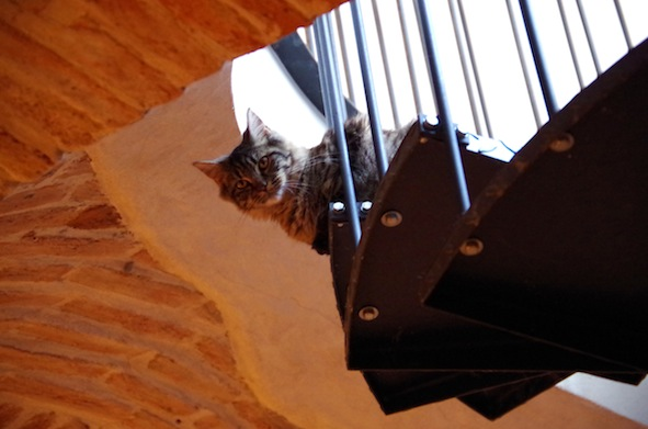 猫カフェ17