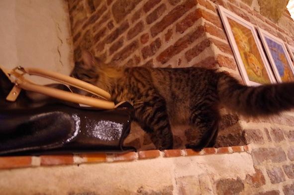 猫カフェ21