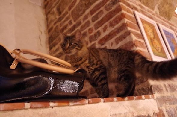 猫カフェ23