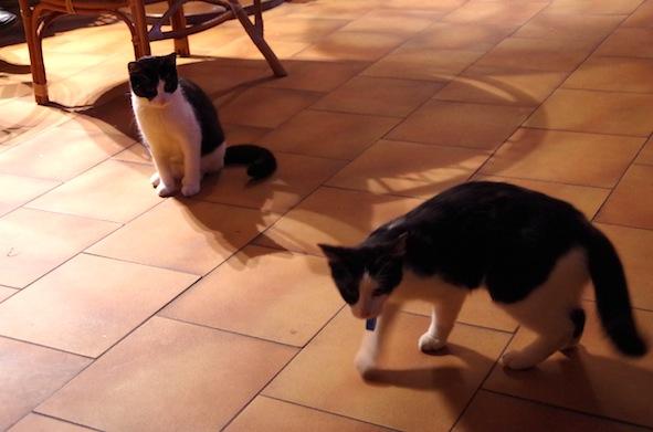 猫カフェ26