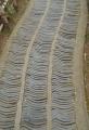 小径の敷石