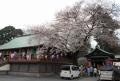 慈恵堂と桜