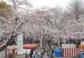 慈恵堂から見た桜