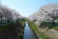花影橋から見る砂川堀用水路