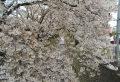 花の間から見る東川