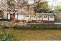葉桜越しに見る民家