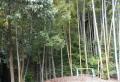 友人宅の竹林