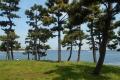 松林から見る海