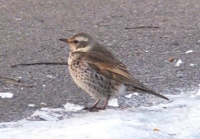 弥生の野鳥1