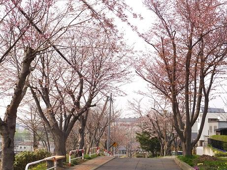 富士下の桜