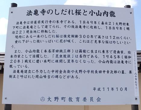 法亀寺の枝垂れ桜4