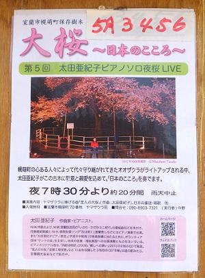 5日の桜4