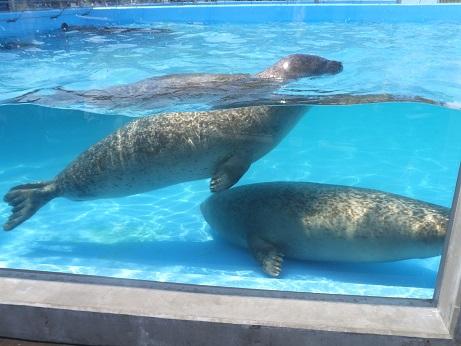 4029の水族館2