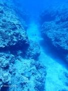 南大東島 海底風景