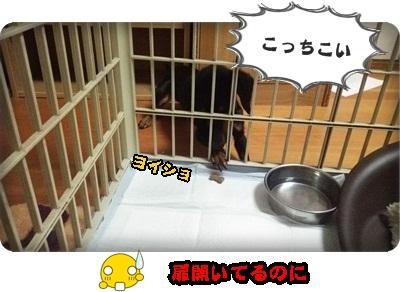 シュシュ入学DSC_1585
