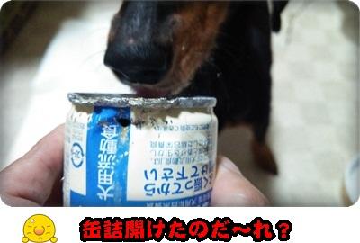 シュシュ缶詰DSC_1597